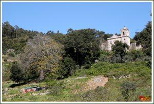 Magnólia Multicentenária do Convento de Nossa Senhora do Desterro ou dos Franciscanos – Monchique (Magnolia grandiflora)